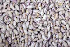 Kidney bean Royalty Free Stock Images