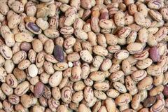 Kidney bean Stock Images