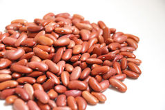 Kidney Bean Stock Image