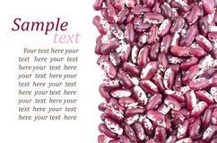 Kidney bean Stock Photo