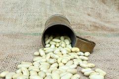 Kidney bean. On vintage background Stock Photos
