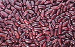 Kidney bean background Royalty Free Stock Image