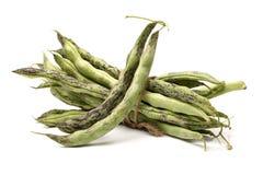 Kidney bean Royalty Free Stock Photos