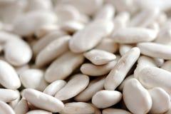 Kidney bean Stock Photos