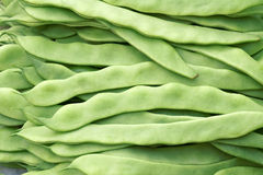 Kidney bean pods Stock Photos