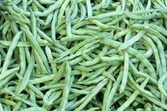 Kidney bean pods Royalty Free Stock Photo