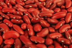 Kidney beans Stock Image