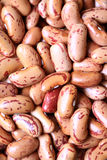 Kidney beans background Stock Image