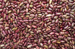 Kidney beans background Royalty Free Stock Photos