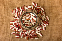 Kidney Beans Royalty Free Stock Image