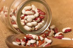 Kidney Beans Stock Images