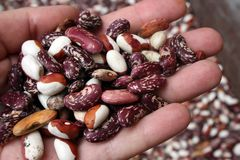 Kidney beans on the hand Stock Image