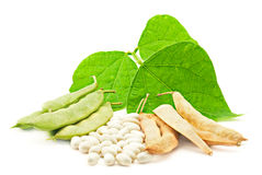 Kidney beans with leaves Royalty Free Stock Photo