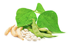 Kidney beans with leaves Royalty Free Stock Photography