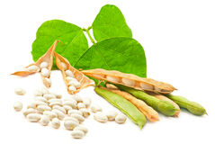 Kidney beans with leaves Royalty Free Stock Photos