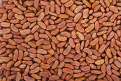Kidney beans or red beans Stock Photos