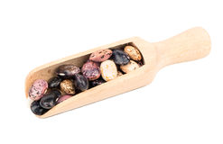 Kidney beans in a scoop. Wooden scoop with multicolored beans on white background Royalty Free Stock Photo