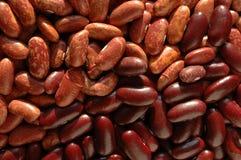 Kidney beans texture Stock Image