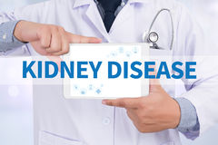 KIDNEY DISEASE. Doctor holding  digital tablet Royalty Free Stock Photos