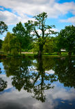 Kidney-like tree reflection Royalty Free Stock Photography