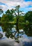 Kidney-like tree reflection Royalty Free Stock Photography