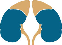 Kidney logo. Illustration art of a kidney logo with isolated background Royalty Free Stock Images