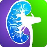 Kidney logo Stock Photos