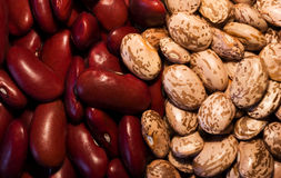 Kidney & Pinto Beans. Background of Pinto and Kidney Beans Royalty Free Stock Images