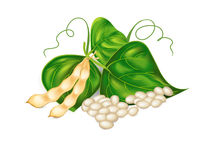 Kidney ( soy ) beans with leaves Stock Image