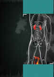 Kidneys Royalty Free Stock Image