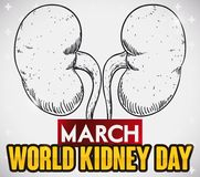 Kidneys in Hand Drawn Design to Commemorate World Kidney Day, Vector Illustration. Poster with a pair of kidneys in hand drawn style with greeting sign to Stock Image