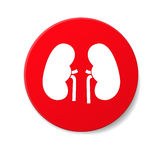 Kidneys icon Royalty Free Stock Photography