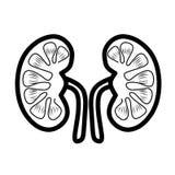Kidneys Icon. kidney care. Human Organ Kidney Icon royalty free illustration