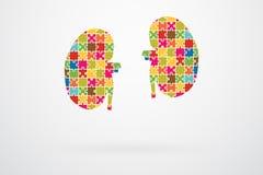 Kidneys Jigsaw Puzzle Royalty Free Stock Photo