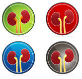 Kidneys round icon set Stock Photography