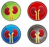 Kidneys round icon set Stock Photography