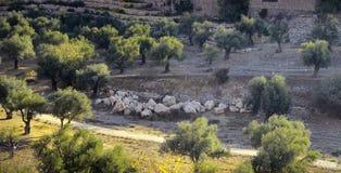 Kidron Valley Израиль Стоковое Изображение
