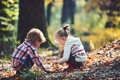 Kids activity and active rest. Children pick acorns from oak trees. Brother and sister camping in autumn forest. Little. Boy and girl friends have fun on fresh stock image