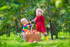Kids with apple basket Royalty Free Stock Image