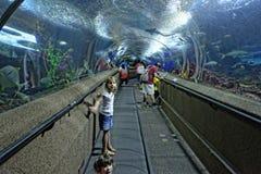 Kids at the aquarium in Singapore stock images