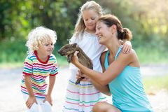 Kids with baby pig animal. Children at farm or zoo. Kids play with farm animals. Child feeding domestic animal. Mother, little boy and girl hold wild boar baby royalty free stock image