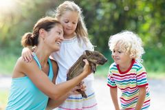 Kids with baby pig animal. Children at farm or zoo. Kids play with farm animals. Child feeding domestic animal. Mother, little boy and girl hold wild boar baby royalty free stock photography