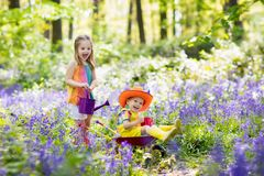 Kids with bluebell flowers, garden tools stock photography