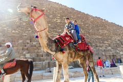 Kids on camel in Giza Pyramids stock images