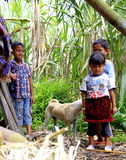 Kids at the cane fields. Kids of the owner of traditional red sugar factory, they are always play around the can fields, and its up to the mountain of merapi at Royalty Free Stock Image