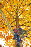 Kids climbed on tree Royalty Free Stock Photography