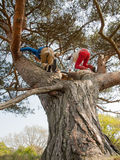 Kids climbing in a tree Stock Images