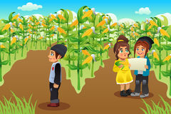 Kids on a Corn Field Stock Images