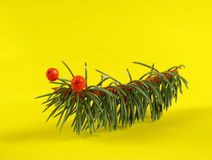 Kids crafts of fir branches, the caterpillars Stock Photos