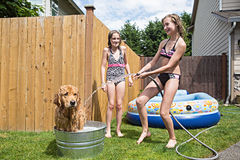 Kids and a dog playing royalty free stock images
